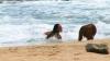 hawaii_five_S06E15_0020